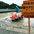 当店のお米は徳島産の「あわみのり」を使用してます。光沢がありもちもちした食感が特徴です。