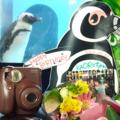 料理メニュー写真ペンギンフレーム入りで写真プレゼント★