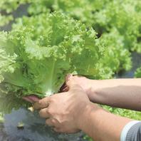 安心・安全の新鮮野菜
