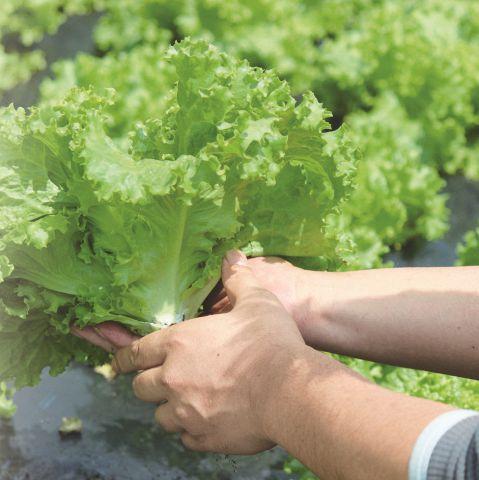 有機認証を取得し、「安心・安全でより良質な新鮮野菜づくり」に積極的に取り組んでいます。農場提携や独自ルートでの一括購入で、良質で新鮮な素材を確保。全国各地から産地直送の安全で美味しい食材を調達しています。また、品質をを常に追求し、最高の商品を作り上げ、お客様に喜んで頂けますよう、メニューの開発に全力を注いでいます。