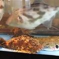 店内の水槽には、時期によってさまざまなお魚が入荷します。