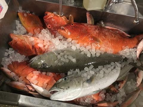 JAPANESE ROBATA ぴかり魚