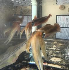 JAPANESE ROBATA ぴかり魚のおすすめ料理1