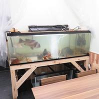 季節感じる旬の魚料理を堪能!一年中飽きない海鮮居酒屋
