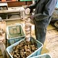 帆立の貝殻に牡蠣の卵を産み付けて飼育。400年以上も前の室町時代から牡蠣の養殖は行われています◎