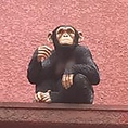 店内入口の上には可愛いお猿さんが!!店主の遊び心があふれている「CAFE4」です