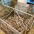 プランクトンがよく育つ環境なので、味わい豊かで高品質な牡蠣に!一般の牡蠣と比べて身が大きくて栄養素がたっぷり!