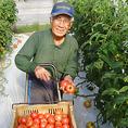 高知県 りぐり自然農園のトマト