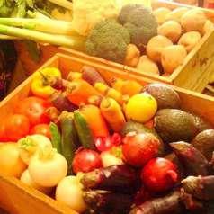 ルンゴカーニバル 野菜居酒屋 真狩村金丸農園直営の特集写真