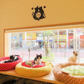 譲渡型保護ねこカフェ にじのはし 平塚のグルメ