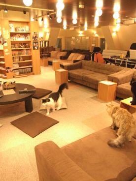 猫の居る休憩所299 にくきゅう 猫カフェの雰囲気1