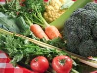 自家菜園の野菜・ハーブ