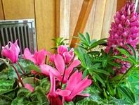 店先にはお花を飾っています。