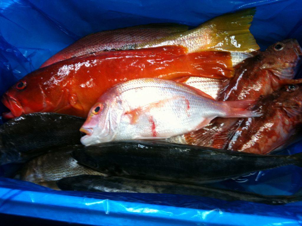 全国各地の漁港直送!新鮮魚介を是非どうぞ!