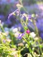 花咲く庭:お庭に咲いた季節の花々を愛でながらの食事が楽しめます。