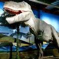 迫力満点【ティラノザウルス】今にも動き出しそうなリアル感!