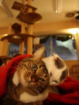 Cat Cafe ねころびの雰囲気1