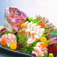 料理メニュー写真真鯛 姿造り