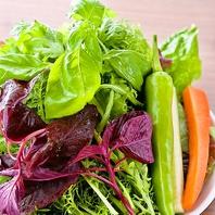 季節の野菜15種以上!朝採れの新鮮野菜がおかわり自由