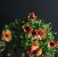 ◆店内のフラワーコーディネイトは【FlowerNoritake】◆店内のフラワーコーディネイトは名古屋栄の【FlowerNoritake】が担当。モダンな空間に合わせて繊細なセレクトでテーブルを演出。