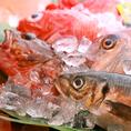 【旬鮮魚専門!活きの良さを堪能】きらく最大の魅力は旬鮮魚!どこにも負けない活きの良さと、美味しさを追求しています。