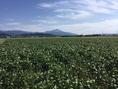 滋賀の大豆畑の大豆を使用しております。