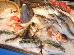 魚真 乃木坂店の写真
