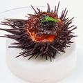 料理メニュー写真ウニのムース