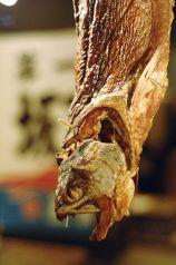 魚やICHIROの写真