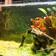金魚が気持ちよさそうに泳ぐ水槽も素敵な雰囲気・・・