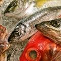 料理メニュー写真本日の鮮魚