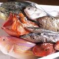 料理メニュー写真チヌ、ハチガラ、イジミなど日替わり入荷の銘魚のお刺身