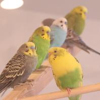 店内にはインコと文鳥が★大分・別府唯一の小鳥カフェ