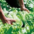 農家直送野菜は毎朝仕入れるため、新鮮でみずみずしくシャキシャキ!かまどかの特製サラダがオススメです!