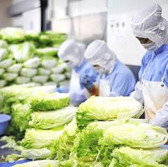 キムチのーメーカーの李朝園のこだわり。美味しいキムチは白菜、唐辛子、塩で決まります。日本全国の農家さんが生産したおいしい白菜を毎日直送。新鮮な白菜を毎日漬け込みます。