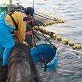 焼津市には、遠洋漁業の基地として主にカツオ・マグロが水揚げされる焼津港と、近海・沿岸のアジ・サバなどが水揚げされる小川港の2つを総称した焼津漁港、シラスや駿河湾でしか漁獲できないサクラエビが水揚げされる大井川港があります。特にカツオ節の生産が盛んになります。