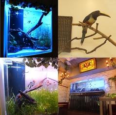 Nature cafe&Dining bar Hidamari ひだまりの雰囲気1