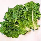 【青サンチュ】焼肉店には欠かせない包菜です。クセが無くシャキシャキした食感が特長。葉に厚みがあり、余計な苦味はありません。カロテン、ビタミンB1、B2、カリウムなどが代表的な栄養素です。