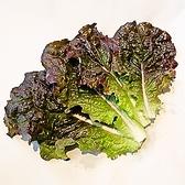 【黒サンチュ】焼肉店には欠かせない包菜です。クセが無くシャキシャキした食感が特長。アントシアニンという抗酸化物質を多く含む葉の色が濃いサンチュほど少し苦味があります。