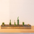 店内には、小さなサボテンや観葉植物がいろいろあります。気持ちをホッとさせてくれます!