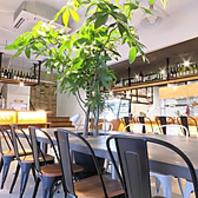 白い店内と緑の大きな木のある癒し空間