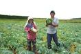 福井県のキャベツ農家、宝珍さん!北陸の冬を越したキャベツh身がぎっしりつまっており甘く、みずみずしいです!愛情をこめて育ったキャベツは安心安全の証♪