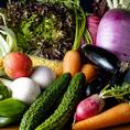 新鮮野菜も旨い◎「居酒屋 かもん 伊勢佐木町店」はお野菜も新鮮なものを厳選して仕入を行っております。地元の契約農家さんからの直送野菜は旬の採れたて野菜を厳選しております!是非新鮮なお野菜もご堪能ください。