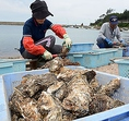 焼津市には、遠洋漁業の基地として主にカツオ・マグロが水揚げされる焼津港と、近海・沿岸のアジ・サバなどが水揚げされる小川港の2つを総称した焼津漁港、シラスや駿河湾でしか漁獲できないサクラエビが水揚げされる大井川港があります。特にカツオ節の生産が盛んで、全国有数の生産地となっています。