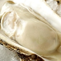 料理メニュー写真厚岸産特大から付き牡蠣