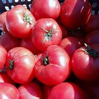 店主自家製トマトは食べ放題!