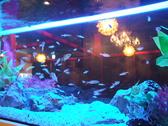 水都の饗宴 京都駅前店の雰囲気2