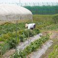 滋賀県の豊かな土壌に恵まれた自家栽培畑