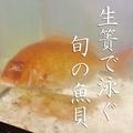 料理メニュー写真活け魚泳ぎ お造り盛り合わせ 3種/5種