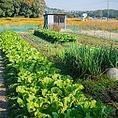 【野菜の地産地消】地元静岡産の新鮮旬菜にこだわりあり。直接地元の農家さんや地元の八百屋さんから、厳選目利きして仕入れています。